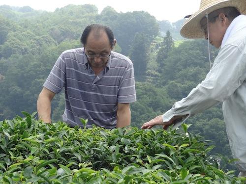 tea7.JPG